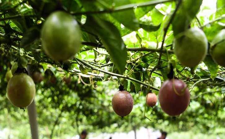 田林富丽水果种植专业合作社