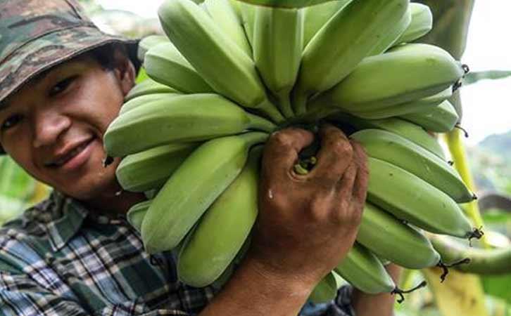 田林县推进实施新型主体与贫困户的利益联结机制
