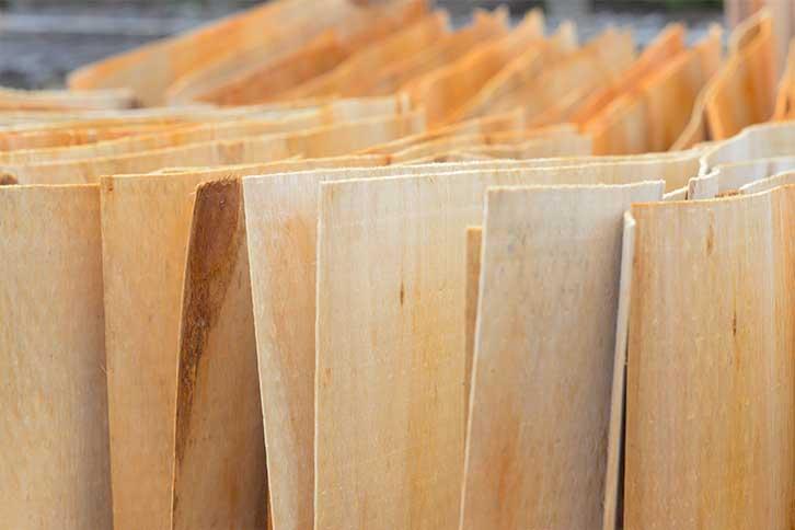 桉木板原材料-桉木单板